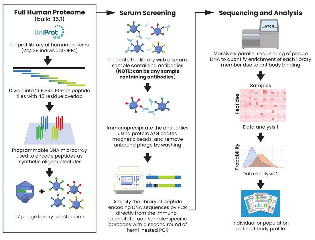 Diagram of VirScan PhIP-Seq Antygen Service Product by CDI Labs
