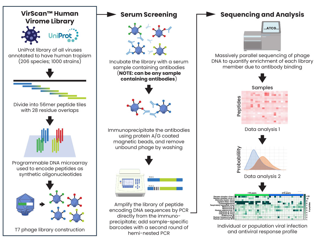 Diagram of HuScan PhIP-Seq Antygen Service Product by CDI Labs
