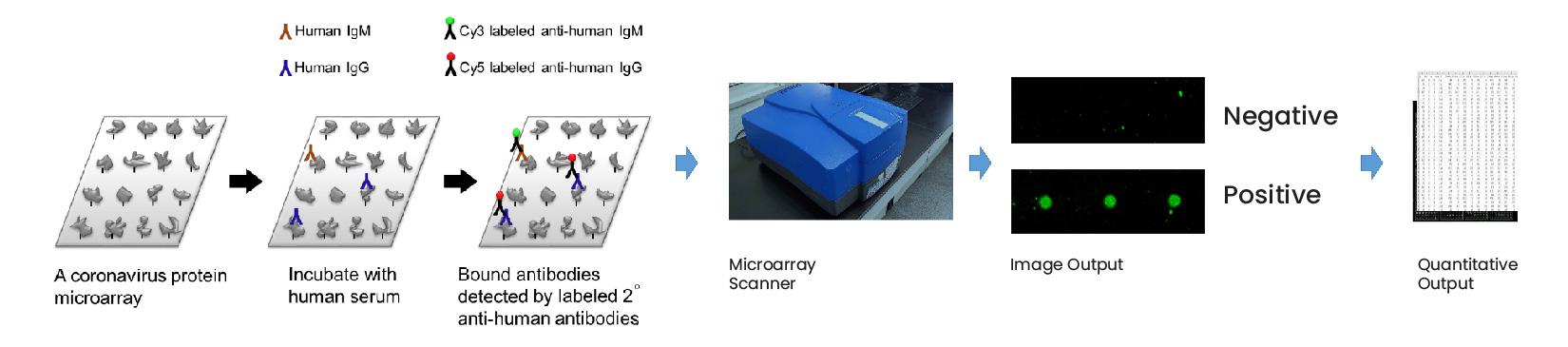 SMI-Microarray-Analysis-Method-for-Antibodies-CDI-Labs-SARS-MERS-INFLUENZA